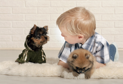 Adorable boy with puppies of Yorkshire terrier and Spitz at home